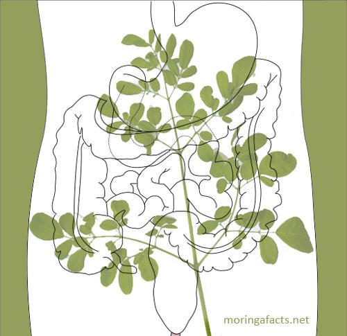 Moringa Helps With Digestion Process – Moringa Facts